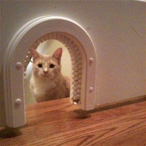 quot kitty cave quot entry way in the basement door except i