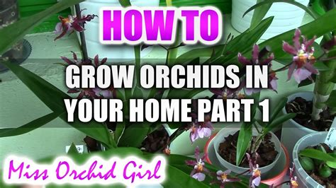 how to grow and rebloom different orchids in a home