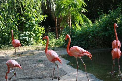 Riverbanks Zoo And Botanical Garden Flamingos