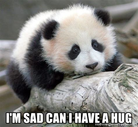Sad Panda Meme Generator - i m sad can i have a hug sad panda meme generator