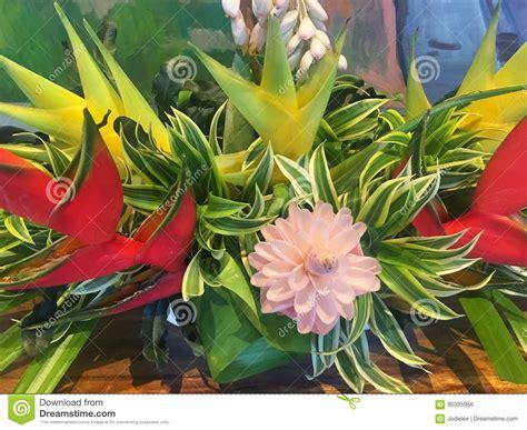 fiori hawaiani immagini di riserva di fiori hawaiani la sovranit 224 di
