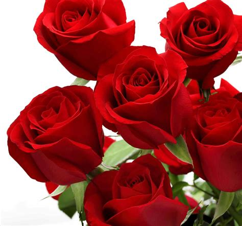 roses and love flowers magazine gift for woman romance images wallpapers u adorable images