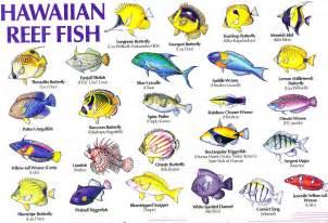 Aloha Joe in Hawaii: A Visual Guide to Hawaii's Reef Fish