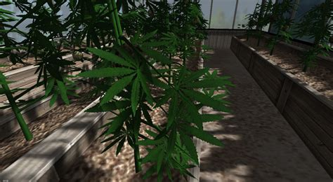 grow ls for fs 2013 hemp booth to grow industrial hemp v 1 0