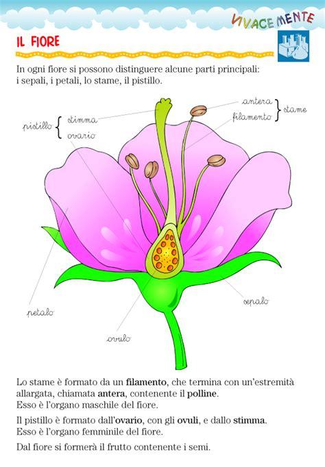 fiore giglio significato il fiore 28 images significato giglio linguaggio dei