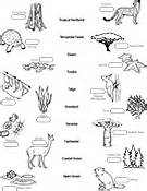 Biology coloring pages amp worksheets asu ask a biologist