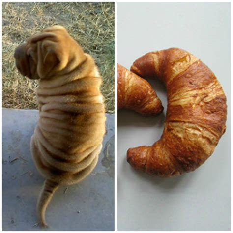 is bread bad for dogs dogs that look like bread and vice versa because the barkpost