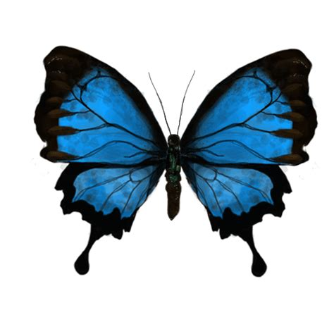 Beautiful Animated Butterfly Gif Images At Best Animations Butterfly 3d Animation