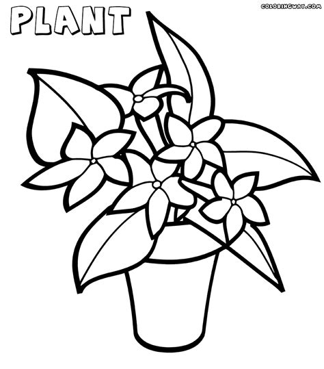 plant coloring pages plant coloring pages coloring pages to and print