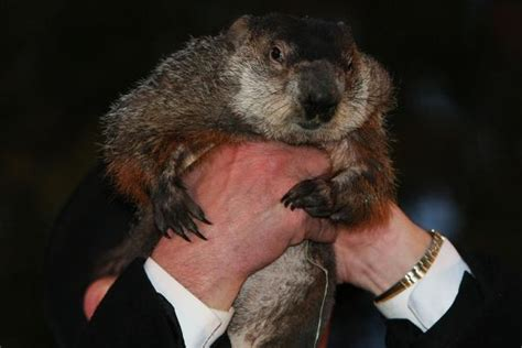 groundhog day one day groundhog day punxsutawney phil does not see shadow