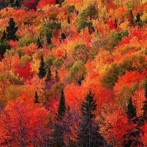 wallpaper iphone 7 autumn دانلود والپیپر برای آیفون آیپاد و آیپد پادشاه فصل ها پاییز