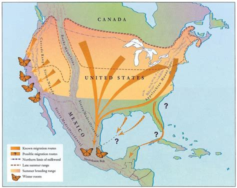 dove migration map texas migratory monarch butterflies bounce back mnn nature network