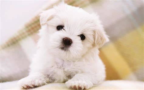 pups gratis cute puppies images collection for free download