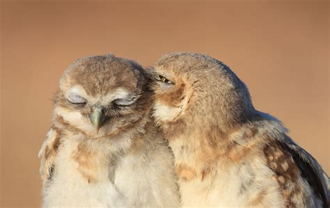 owl lover owl love smithsonian photo contest smithsonian