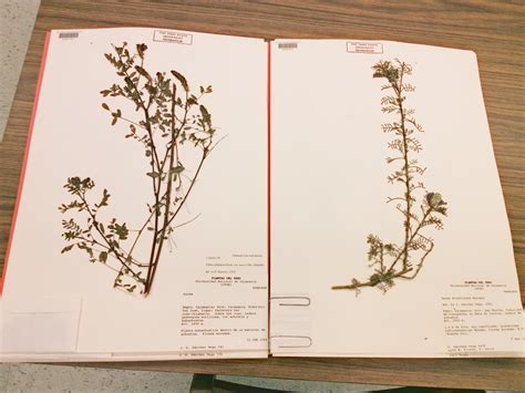 how to make pressed flower l shades how to make a herbarium file www pixshark com images