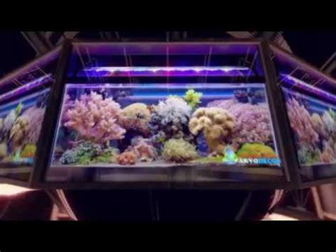 design aquarium air laut dekorasi aquarium air laut youtube