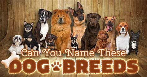 can you breed and dogs quizly trivia and personality quizzes for
