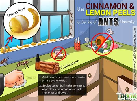 how to get rid of ants fast naturally top 10 home remedies