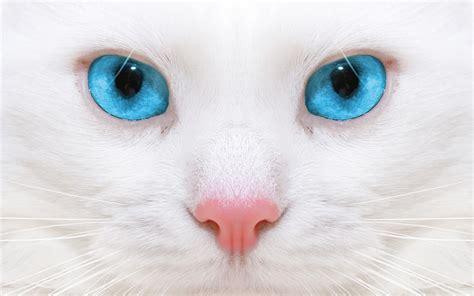 imagenes de ojos normales hd katten wallpapers en foto s mooie leuke achtergronden
