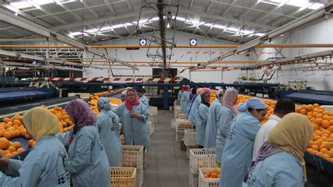 cold storage new year oranges morocco archives global cold chain alliance