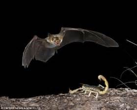 Bats In Planet With Animals How Do Bats Hunt At