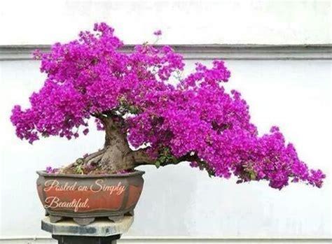 Bonsai Pink pink flower bonsai tree bonsai