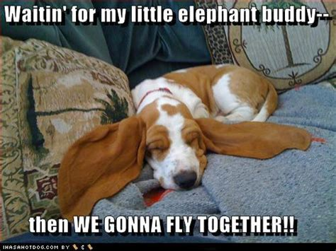 puppy captions photos with captions 4 motley dogs