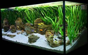 29 best images about tropical fish tank on