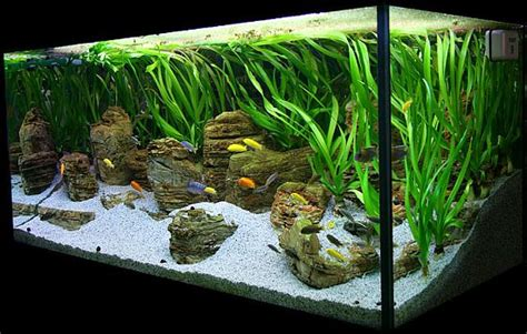 Fish Tank Aquascape by 29 Best Images About Tropical Fish Tank On