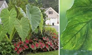 using architectural plants in the garden the garden glove