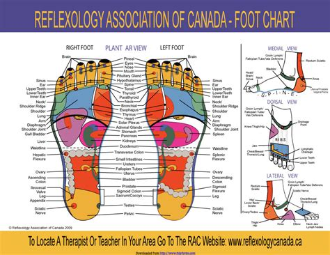 reflexology diagram 31 printable foot reflexology charts maps template lab