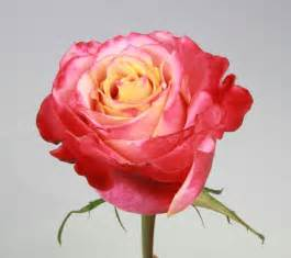 Flowers Out Of Paper - 3d standard rose roses flowers by category sierra