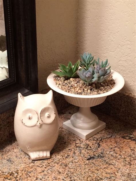 succulents in bathroom small succulents in a white planter can make a great