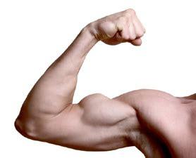 Barbel Yang Bagus Ciricara Cara Bentuk Otot Tangan Yang Besar Ciricara