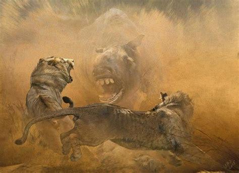 velizar simeonovski  north meets south  inexperienced american lion teens panthera atr