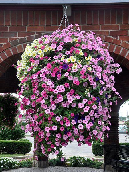 petunias hanging basket garden and landscape pinterest