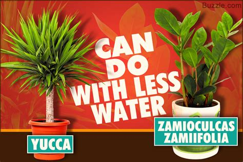 plants that don t need a lot of sun plants that surprisingly don t need much water after all