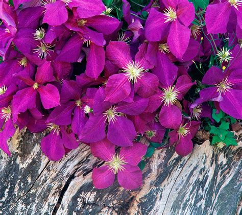 flowers that bloom at beautiful flowers wallpapers flowers for flower beautiful flowers hd wallpapers