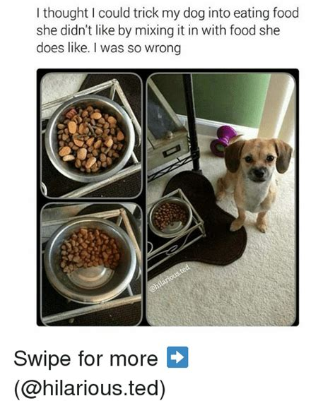 my dog isn t eating what s wrong 25 best memes about ted hilarious food and funny ted