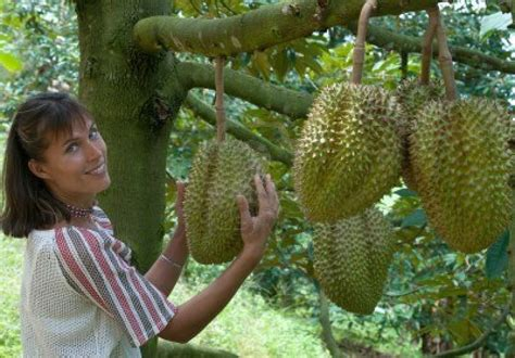 stinky fruit tree malaysia durian heaven zen and the of living in bansko