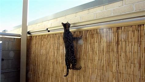 Cat proof garden ideas ? keep your pets inside your backyard