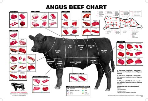 cow cuts diagram the best beef cuts for cooking and a recipe for beef
