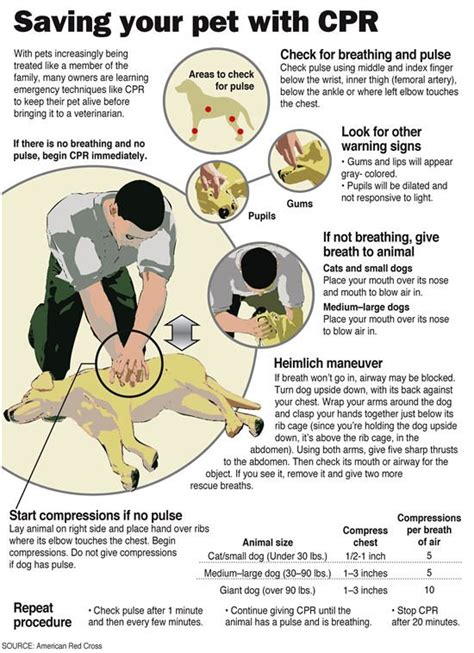cpr dogs do you how to perform cpr
