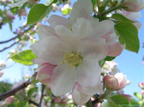 imagenes raras de rosas flores exoticas 5 car interior design