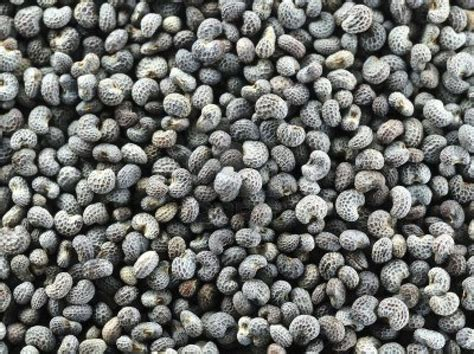 puppy seed poppy seeds from foodtolive free shipping no tax