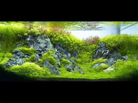 aquarium design rocks 109 best images about iwagumi style on pinterest photo