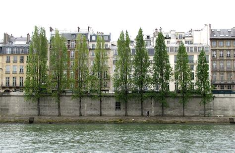 on the bank of the seine bank of the seine photograph by keith stokes