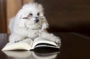top 10 most intelligent breeds in the world omg top