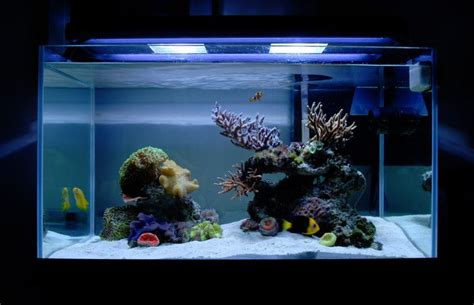 simple aquascaping ideas tips and tricks on creating amazing aquascapes reef