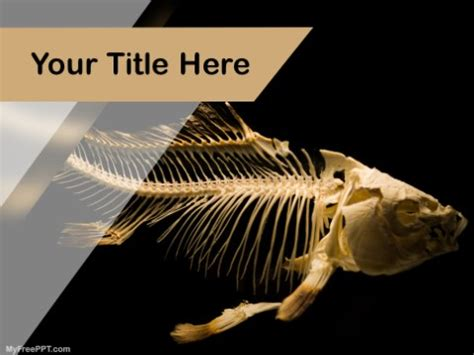 powerpoint templates for zoology powerpoint templates for zoology images powerpoint